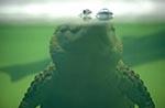 Australia;Australian;South_Pacific;Oceania;Downunder;reptiles;animals;fauna;Sydney;New_South_Wales;Crocodile;Australian_Wildlife_Park
