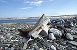 Canada;Canadian;North_America;Arctic;Dead_Mans_Island;Driftwood;ecosystem;environment;glacial;global_warming;ice;landscapes;Nunavut;Nunavut_Territory;polar;scenery;scenic