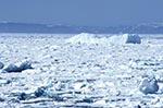 Canada;Canadian;North_America;Arctic;Davis_Strait;ecosystem;environment;glacial;global_warming;ice;icepack;landscapes;Nunavut;Nunavut_Territory;polar;Polar_bear;scenery;scenic;Ursus_maritimus