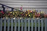 Canada;Canadian;North_America;Yukon;Arctic;Dawson_City;Fence;flower_bed;Yukon;Yukon_Territory
