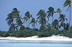 Cook_Islands;South_Pacific;Oceania;island;Polynesian;beaches;coasts;seashores;seaside;trees;plants;botany;botanical;flora;tropical;Palm_trees;Tapuaetai;One_Foot;island;Aitutaki