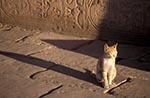 Egypt;Egyptian;Cat;Temple_of_Kom_Ombo;Aswan;Ancient;Archaeology;Architecture;arid;Art;Art_history;Cat;cats;deserts;domestic_animals;fauna;felines;mammals;Middle_East;Near_East;Nile;North_Africa;Ombo;rivers;streams;Temple_of_Kom;water;Africans