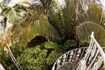 England;English;Great_Britain;British_Isles;United_Kingdom;British;Europe;Europa;botanical;botany;flora;gardens;islands;parks;plants;Richmond;Royal_Botanic_Gardens;Surrey;trees;UNESCO;World_Heritage_Site;Palm_House;Kew