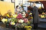 aged;elderly;Europe;female;Finland;Finnish;Flower;Helsinki;Kauppatori;Market_Square;marketplaces;markets;mature;merchants;older;people;Finns;person;persons;retailers;salespersons;sellers;seniors;shopping;Suomi;vendor;vendors;woman;women