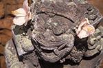 Art;Art_history;Asia;Australasia;Bali;Balinese;Barong;beliefs;creed;faith;Hindu;Hinduism;Indonesia;Indonesian;Mengwi;Pura_Taman_Ayun_Temple;religion;Sculpture;Southeast_Asia;statue;Stone;temple;tropical;UNESCO;World_Heritage_Site