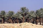 Israel;Israeli;Holy_Land;deserts;arid;barren;Middle_East;Near_East;Judean_Desert