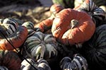 Kyrgyzstan;Asia;Kyrgyz_Republic;Kyrgyz;Kirgiz;Kirgizstan;Asia;Bishkek;Central_Asia;foods;gourd;pumpkin;squash;Squash;vegetables