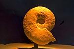 Mexico;Mexican;Latin_America;North_America;Central_America;Coahuila;Museo_del_Desierto;desert;Ammonite;Fossil;museum;palaeontology;Saltillo