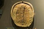 Mexico;Mexican;Latin_America;North_America;Central_America;Coahuila;Museo_del_Desierto;desert;Giant_trilobite;museum;palaeontology;Saltillo