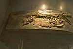 Mexico;Mexican;Latin_America;North_America;Central_America;Coahuila;Museo_del_Desierto;desert;amphibian;fossil;museum;palaeontology;Saltillo