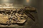 Mexico;Mexican;Latin_America;North_America;Central_America;Coahuila;Museo_del_Desierto;desert;fossil;insect;museum;palaeontology;Saltillo