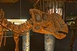 Mexico;Mexican;Latin_America;North_America;Central_America;Coahuila;Museo_del_Desierto;desert;dinosaur;Kritosaurus_navajovius;museum;palaeontology;Saltillo