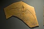 Mexico;Mexican;Latin_America;North_America;Central_America;Coahuila;Museo_del_Desierto;desert;bird;fossil;museum;palaeontology;Saltillo