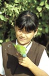 Mexico;Mexican;Latin_America;North_America;Central_America;animals;birds;childhood;children;fauna;girl;girls;child;children;youngsters;kids;childhood;person;people;Mexicans;girls;kids;ornithology;people;Mexicans;persons;Sierra_Madre;youngsters;Girl;holding;green;parakeet;Copala;Sinaloa