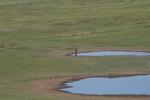 Arkhangai_Province;Asia;birds;_ornithology;_animals;_fauna;Khogno_Khan_Uul_Nature_Reserve;Mongolia;Mongolian
