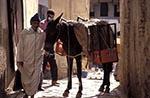Morocco;Moroccan;Africa;domestic_animals;equestrian;farm_animals;fauna;livestock;male;mammals;man;men;_mules;people;Moroccans;Arabs;Arabians;Arabic;person;persons;people;Moroccans;Arabs;Arabians;Arabic;UNESCO;World_Heritage_Site;Fez;Fes;_Man;mule;street;Medina;Fez
