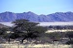 Namibia;Namibian;Africa;deserts;arid;barren;deserts;arid;barren;Namib_Naukluft_Park;Hardap;Acacias
