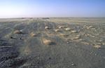Pakistan;_Pakistani;_Asia;_Indian_Subcontinent;_Balochistan;_Vegetation;_Western_Singraj;_Desert