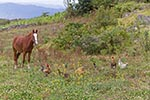chicken;_poultry;_domestic_animals;_fauna;_farm_animals;_livestock;_mammals;_birds;_fowl;Cohechan;horses;_equestrian;_domestic_animals;_fauna;_farm_animals;_livestock;_mammals;Latin_America;Peru;Peruvian;South_America