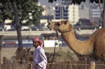 United_Arab_Emirates;UAE;UAE;Emirati;Emirian;Arabian;Arabia_;camel;camels;domestic_animals;Dubai;Emiratis;fauna;Heritage;ing;male;mammals;man;Man;men;Middle_East;Near_East;people;Arabs;Arabians;Arabic;person;persons;Village;Arabian_Peninsula