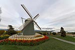 Windmill;garden;RoozenGaaarde;Mount_Vernon;Skagit_Valley;Washington;United_States;America;blooms;blossoms;botanical;botany;flora;flowers;gardens;Mount_Vernon;North_America;plants;Skagit_Valley;United_States;United_States_of_America;USA;Washington